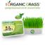 i Organic Grass™ ชุดปลูกข้าวสาลี สำหรับสัตว์เลี้ยง thumbnail 1