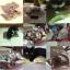 Cat Scratcher Wave แผ่นฝนเล็บแมว thumbnail 8