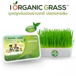 i Organic Grass ชุดปลูกข้าวสาลี สำหรับสัตว์เลี้ยง Pro 2017