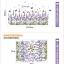 สติ๊กเกอร์ต้นจัมโบ้สูง217cm a636 thumbnail 3