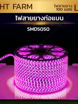ไฟสายยาง SMD 5050 (100 m.) สีชมพู (ท่อแบน)