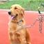 สายจูงสุนัขพันธุ์ใหญ่ สีเขียว thumbnail 1
