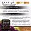 สารสกัดจากเมล็ดองุ่น Lanature Grape Seed Extract thumbnail 6