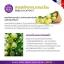 ไฟทีนี เบสท์ เอ็กซ์ตร้า (Phyteney Best Extra) ผลิตภัณฑ์ลดน้ำหนักระชับสัดส่วน ส่งฟรี EMS thumbnail 7