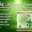 ผลิตภัณฑ์อาหารเสริมลดน้ำหนัก ราจาน่า (Rajana) thumbnail 2