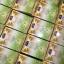 สบู่โสมมะนาวทองคำ (Gold Ginseng Lemon Facial Soap by jeezz) thumbnail 12