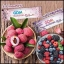 จีดีเอ็ม บลอสซั่ม เจลลี่ GDM Blossom Jelly ผลิตภัณฑ์ลดน้ำหนักรูปแบบใหม่ thumbnail 4