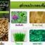 คลอโรฟิลลิน ผักเม็ดสำหรับคนไม่ชอบกินผัก (Chorofyllin Alfalfa Wheatgrass) thumbnail 8