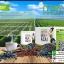 สไวเซอร์ คอฟฟี่ มิกซ์ พลัส กาแฟอาซาอิเบอร์รี่ Swizer Coffee Mix+ Acai thumbnail 3