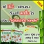 แผ่นแปะเท้าดูดสารพิษเพื่อสุขภาพ Kinoki Cleansing Detox Foot Pads thumbnail 2