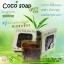 สบู่โคโค่โซป (COCO soap By Little Baby) สบู่มะพร้าว ทำความสะอาดผิวหน้าจากธรรมชาติ thumbnail 8