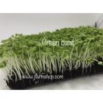 Basil Micro-Greens อิตาเลี่ยนเบซิล โหระพาฝรั่ง 10 กรัม
