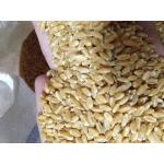 เมล็ดข้าวสาลี, ข้าวสาลี, wheatgrass seed