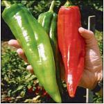 พริกบิ๊กจิม - Big Jim Pepper 15 เมล็ด
