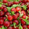 พริกเชอรี่บอมบ์ - Cherry Bomb Pepper