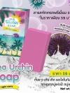 สบู่หอยเม่น (Sea Urchin Soap By Night Merry)