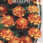 ดาวเรืองโบเลโร่ - Bolero Marigold ซองดั้งเดิม 100 เมล็ด