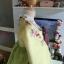 """Hanbok ผ้าไหมพรีเมี่ยม สีเหลืองตัดเขียวใบไม้ อก 34"""" สูง 160 thumbnail 5"""