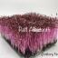 Amaranth microgreen เมล็ดผักโขมเเดง thumbnail 4