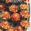 ดาวเรืองโบเลโร่ - Bolero Marigold ซองดั้งเดิม 100 เมล็ด thumbnail 1
