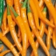 พริกไซฮาเรลล่าสีส้ม - Syharella Orange Pepper ซองดั้งเดิม thumbnail 2
