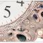 นาฬิแขวนผนัง-สไตล์วินเทจ ทรงยุโรป หรูหรามีระดับ ทันสมัย (Pre) thumbnail 9