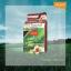 โลแลน เนเจอร์ โค้ด คัลเลอร์ แชมพู ปราศจากแอมโมเนีย N5 น้ำตาลประกายแดง (สีแฟชั่น) thumbnail 1
