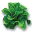เมล็ดพันธุ์ Green Cos (เคลือบ) 25 เมล็ด thumbnail 2