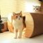 บ้านแมวหน้าแมว thumbnail 1