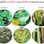 4สหาย จุลินทรีย์กำจัดโรคพืชทุกชนิด thumbnail 6