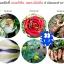 4สหาย จุลินทรีย์กำจัดโรคพืชทุกชนิด thumbnail 7