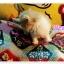 น้องแมวเปอร์เซียน่ารัก thumbnail 8