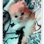 น้องแมวเปอร์เซียน่ารัก thumbnail 7