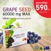 (แบ่งขาย 30 เม็ด) Angel's secret Grape Seed Extract 60,000 mg MAX .สารสกัดเมล็ด60,000 mg.สารสกัดจากเมล็ดองุ่นเข้มข้นที่สุด บำรุงผิวให้ขาวกระจ่างใส ลดเส้นเลือดขอด จากออสเตรเลีย