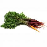 Carrot Selection Red - แครอทแดงสเปน