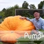 ฟักทอง - Pumpkins
