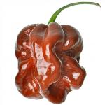 ฺฺBrown habanero pepper - ฮาบาเนโร่น้ำตาล