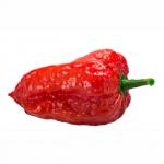 Bhut Jolokia Pepper (India ระดับความเผ็ด 700,000 - 1,000,000 SHU )