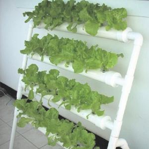 รางผักไฮโดรฯพร้อมปลูกอุปกรณ์ครบครัน(ยังไม่รวมค่าขนส่ง)