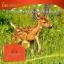 (แบ่งขาย 30 เม็ด ) Wealthy Health Deer Placental 50,000mg. รกกวางชะลอวัย ผิวอ่อนเยาว์ thumbnail 4