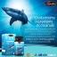 น้ำมันตับปลาฉลาม 1,000 mg. Auswelllife Pure Squalene Tasmanian บำรุงผม ผิว เล็บ สุขภาพโดยรวมขนาด 60 เม็ด มีอย. thumbnail 4
