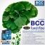 ( 2 ขวด) BCC (Brain and Cardio Care with Squalene & Ginkgo) วิตามินบำรุงสมอง และหัวใจ Auswelllife ขนาด 60 เม็ด จากออสเตรเลีย thumbnail 4