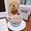 แพนเซีย คอฟฟี่ PANCEA COFFEE (10 ซอง) thumbnail 5