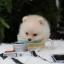 ปอมหน้าหมี เพศผู้ สีครีม หน้าสั้น ขาใหญ่ สายเลือดดี ขนสวย อายุ 2 เดือนครับ ...แนะนำเข้าชมตัวจริงได้ที่ ลาดพร้าว 101 แยก 46 นัดล่วงหน้าอย่างน้อย 1-2 ชม. ได้ที่ Line : @heropom Tel : 0890888441 นะครับ thumbnail 2