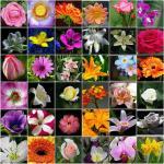 กลิ่นแต่งอาหารแนวดอกไม้ (Flower Flavour Series)