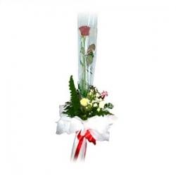 ช่อกุหลาบวาเลนไทน์สีแดงหรือขาว 1 ดอก