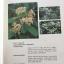 MEDICINAL PLANTS GARDEN IN PHUTTHAMONTHON. รวมรวมต้นไม้ดอก-ไม้ประดับในพุทธมณฑล จัดพิมพ์เนื่องในวโรกาสที่พระบาทสมเด็จพระเจ้าอยู่หัว ภูมิพลอดุลยเดช ครองราชย์ครบ 50 ปี thumbnail 48