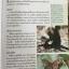 ผีเสื้อ คู่มือดูผีเสื้อในประเทศไทย. ผู้เขียน จารุจินต์ นภีตะภัฎ และ เกรียงไกร สุวรรณภักดิ์ thumbnail 18