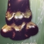 พระปิดตามหาอุด(เมฆพัด)พิมพ์พุงป่อง วัดห้วยจระเข้ นครปฐม หนังสือ SPIRIT Vol.5 No.52. March 2010 thumbnail 10
