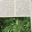 เฟิน ต้นตระกูลไม้ประดับ ฉบับปรับปรุงและเพิ่มเติม thumbnail 10